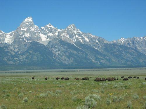 mountains landscape buffalo