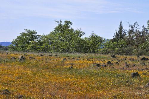 Mountaintop Field Of Flowers