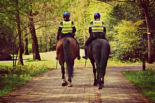 mounted police  horse  rider