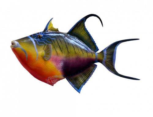 Mounted Queen Triggerfish