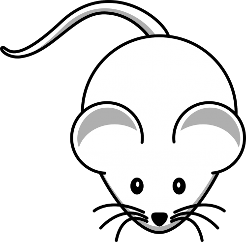 mouse rodent gnawer