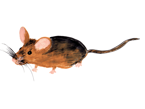 mouse watercolor isolated