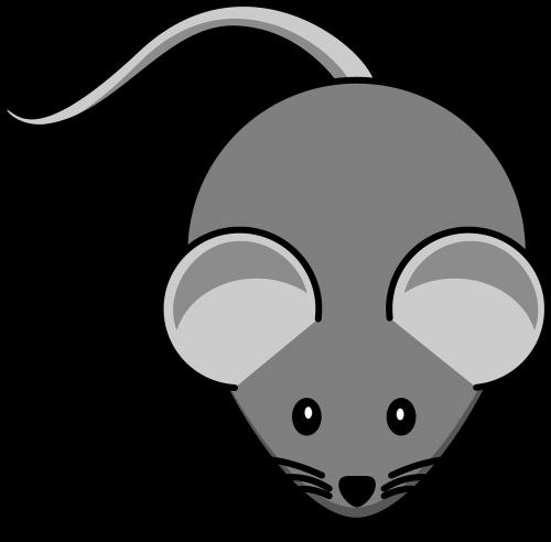 mouse grey animal