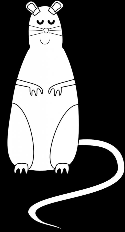 mouse rodent rat
