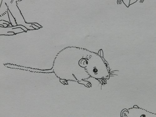 mouse animal coloring pages