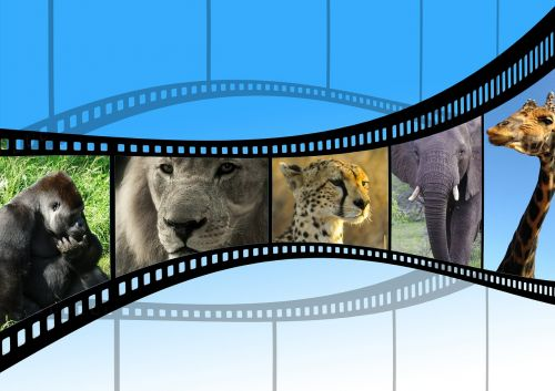 movie animal movie nature shots