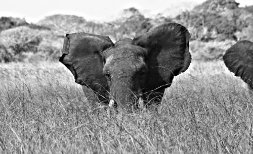mozambique pontamalongane elephantsanqtuary