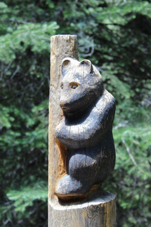 mt lemmon arizona bear