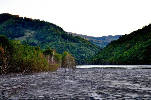 purvas,pelkė,ežeras,gamta,vanduo,ekologija,purvas,natūralus,aplinka,sausas