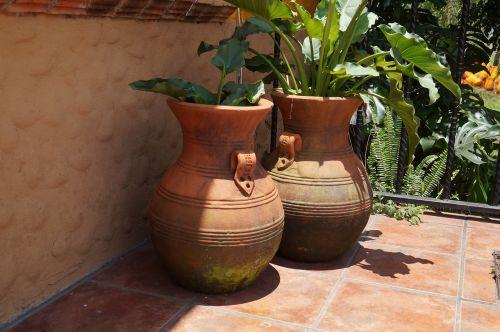 mud pots plants