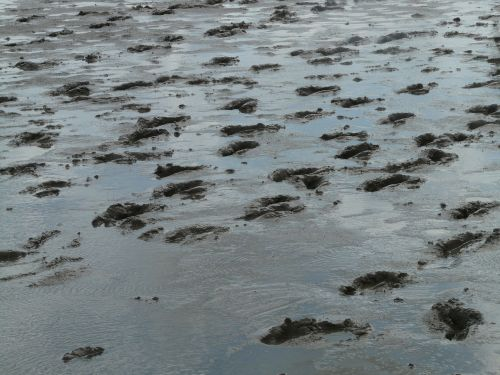 mudflat hiking traces hike