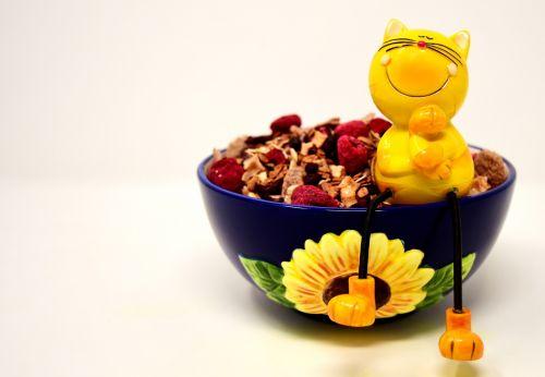 muesli bowl cat