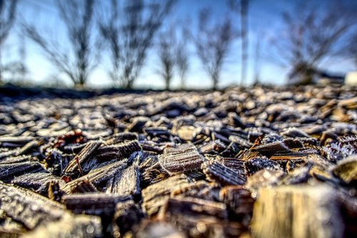 mulch  wood  protection