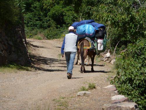 mule muleteer road
