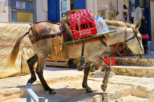 mule load back in