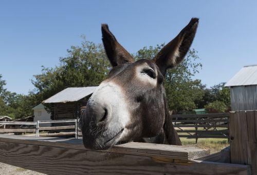 mule head farm