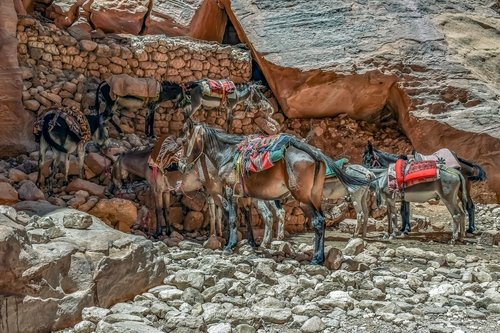 mules  donkeys  transportation