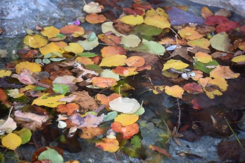 Multicolored Leaves Floating