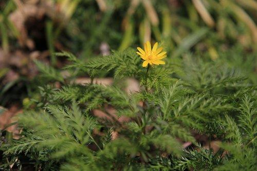 multiple seconds  wildflower  wild