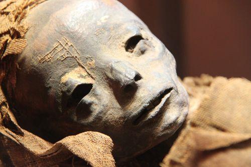 mummy museum egyptian