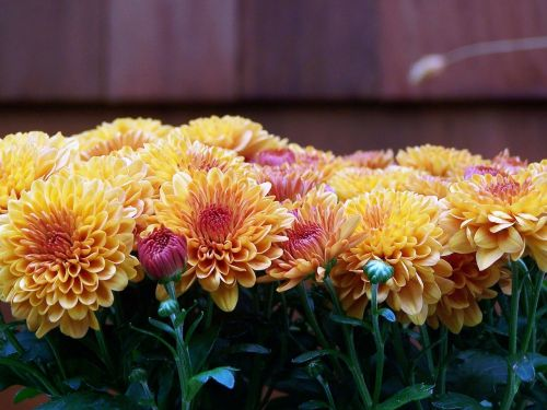 mums fall floral