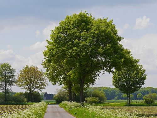 münsterland spring fields