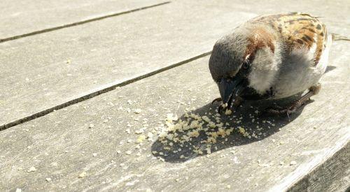 mus bird crumbs