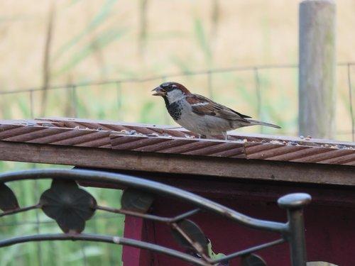 mus  bird  nature