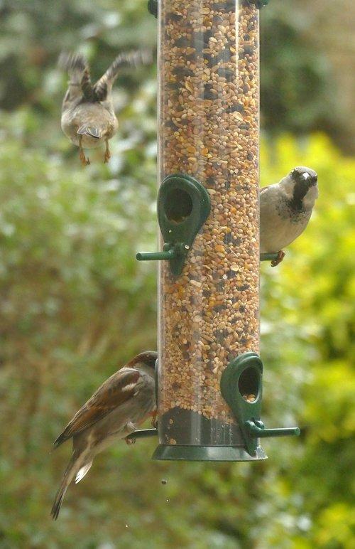 mus  bird  fauna