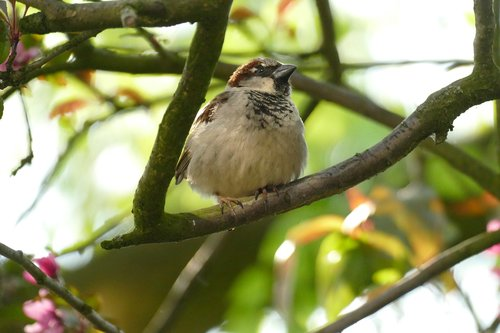 mus  homester  bird