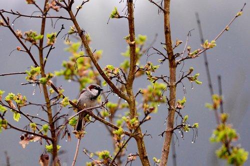 mus  bird  by