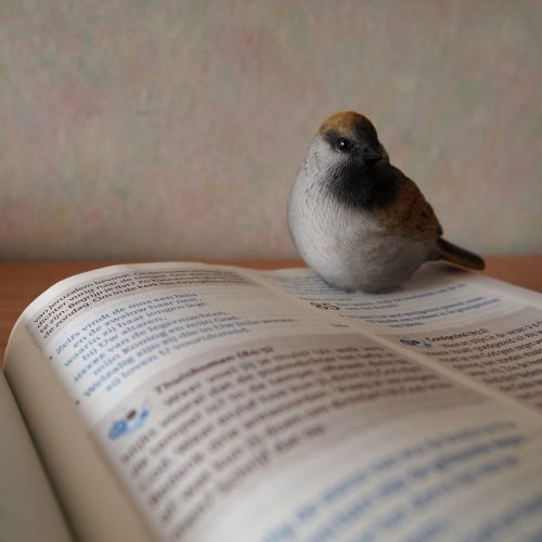 mus bible book