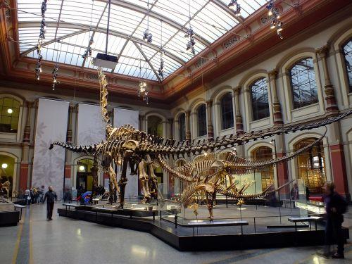 museum berlin natural history