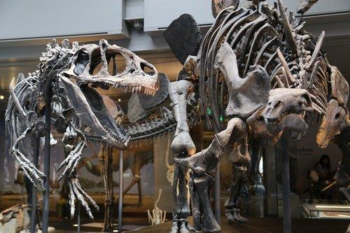 museum  skeleton  dinosaur