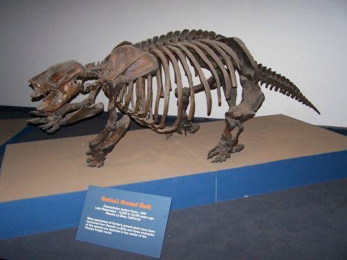 museum model paleontology