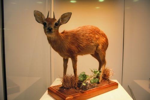 Museum Animal 10