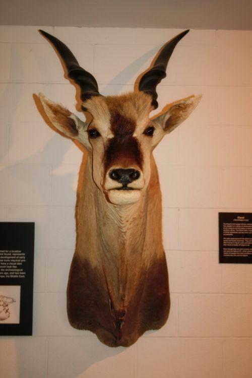 Museum Animal 11