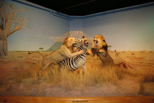 Museum Animal 2