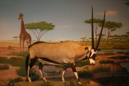 Museum Animal 3