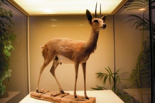 Museum Animal 8