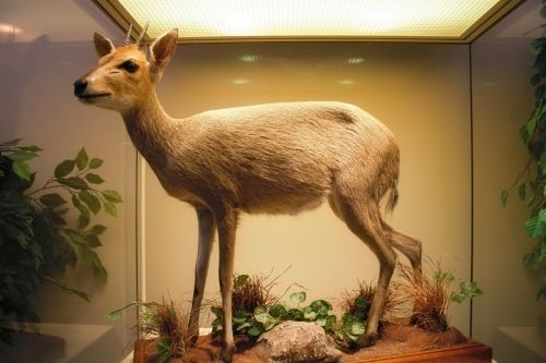 Museum Animal 9