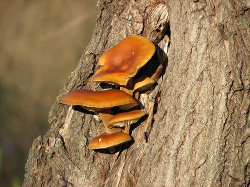 mushroom wood nature