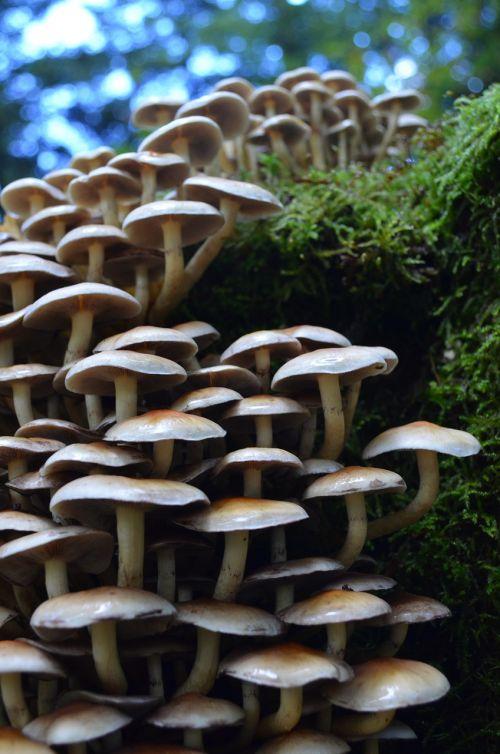 mushroom forest mushrooms autumn