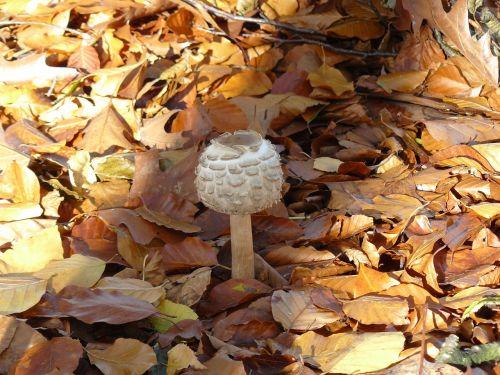 mushroom foraging autumn