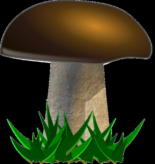 mushroom yellow boletus boletus