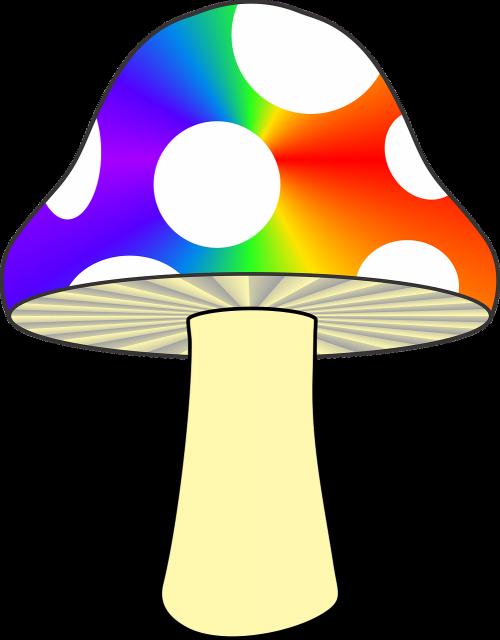 mushroom nature colorful mushroom