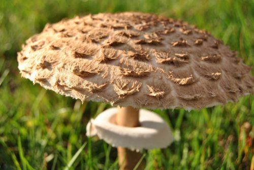 mushroom black forest autumn