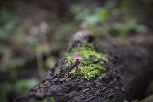 mushroom nature wood