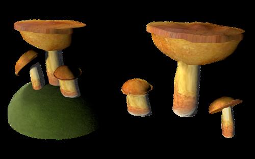 mushroom cep isolated