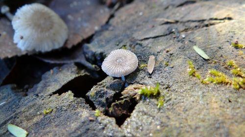 mushroom wabi-sabi nature